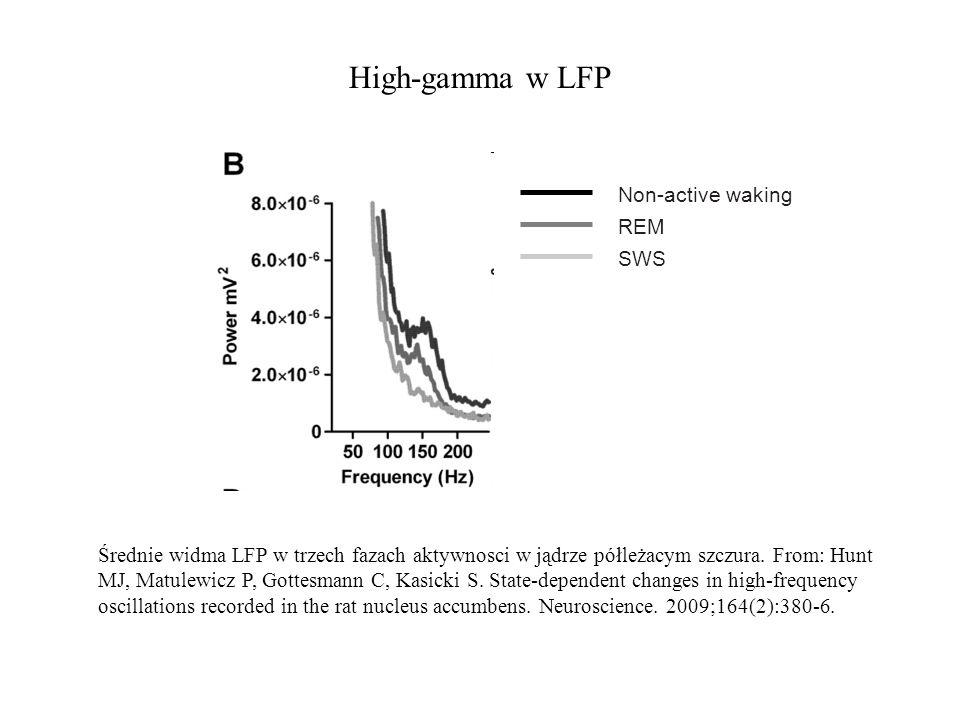 High-gamma w LFP Średnie widma LFP w trzech fazach aktywnosci w jądrze półleżacym szczura. From: Hunt MJ, Matulewicz P, Gottesmann C, Kasicki S. State