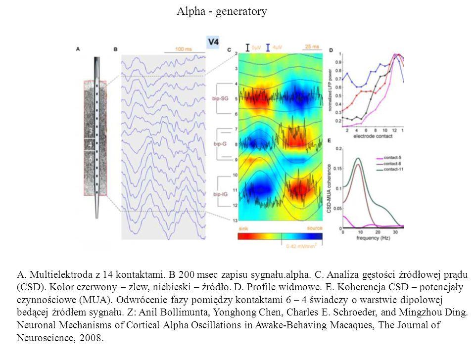 Alpha - generatory A. Multielektroda z 14 kontaktami. B 200 msec zapisu sygnału.alpha. C. Analiza gęstości źródłowej prądu (CSD). Kolor czerwony – zle