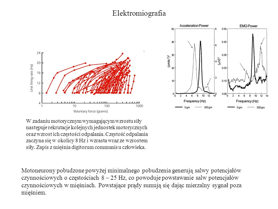 Elektromiografia Motoneurony pobudzone powyżej minimalnego pobudzenia generują salwy potencjałów czynnościowych o częstościach 8 – 25 Hz, co powoduje