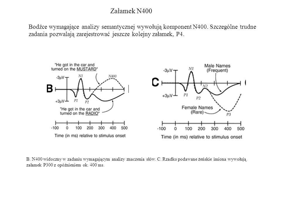 Załamek N400 Bodźce wymagające analizy semantycznej wywołują komponent N400. Szczególne trudne zadania pozwalają zarejestrować jeszcze kolejny załamek