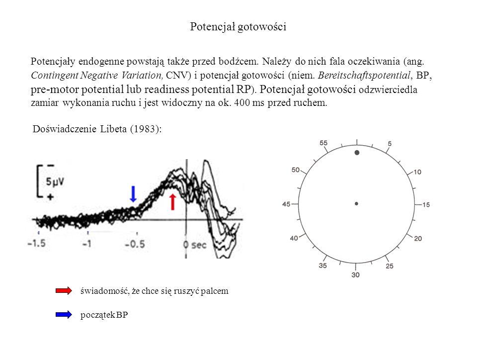 Potencjał gotowości Potencjały endogenne powstają także przed bodźcem. Należy do nich fala oczekiwania (ang. Contingent Negative Variation, CNV) i pot