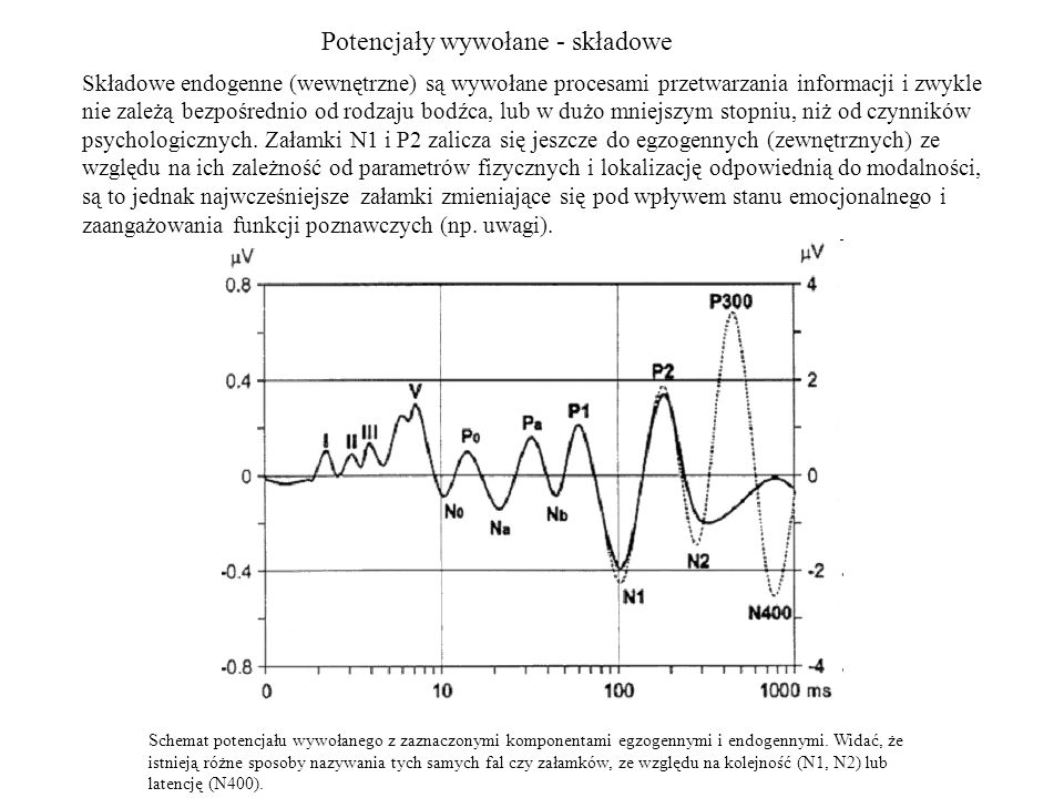 Potencjały wywołane - składowe Składowe endogenne (wewnętrzne) są wywołane procesami przetwarzania informacji i zwykle nie zależą bezpośrednio od rodz