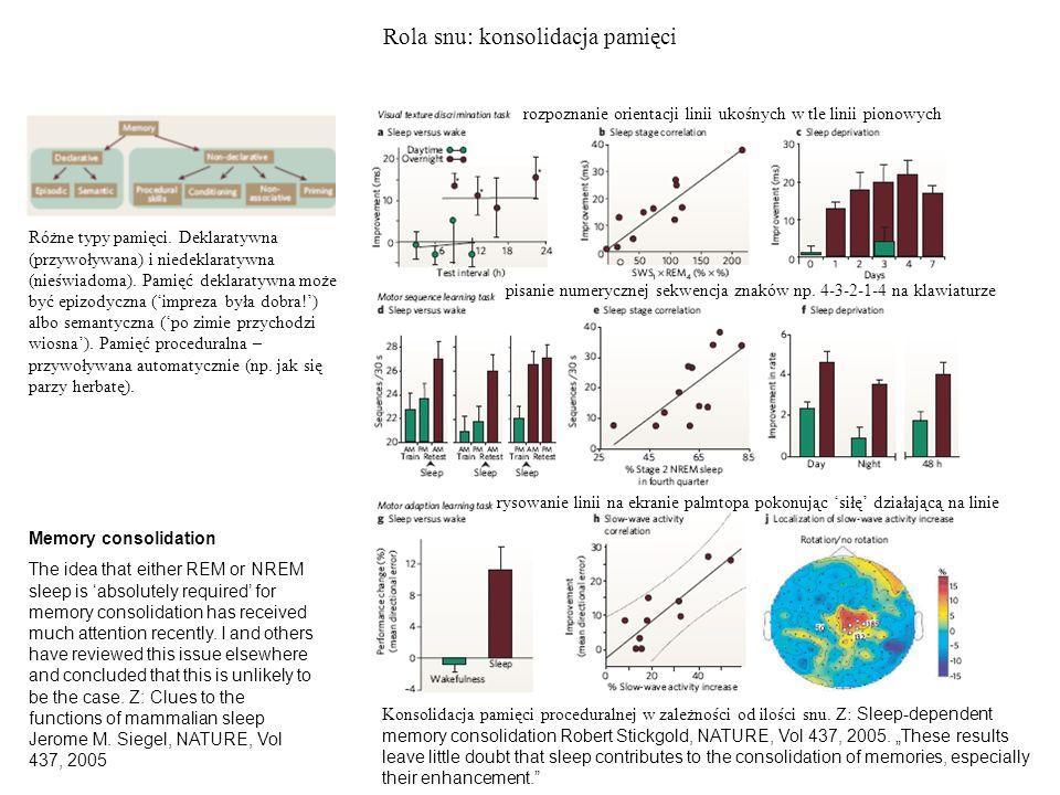 Rola snu: konsolidacja pamięci Konsolidacja pamięci proceduralnej w zależności od ilości snu. Z: Sleep-dependent memory consolidation Robert Stickgold