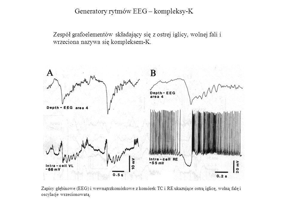 Generatory rytmów EEG – kompleksy-K Zapisy głębinowe (EEG) i wewnątrzkomórkowe z komórek TC i RE ukazujące ostrą iglicę, wolną falę i oscylacje wrzeci