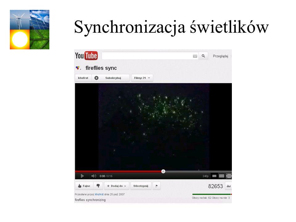Synchronizacja świetlików