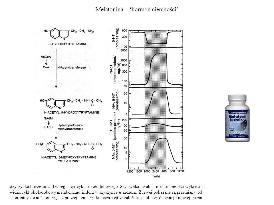 Melatonina – hormon ciemności Szyszynka bierze udział w regulacji cyklu okołodobowego. Szyszynka uwalnia melatonine. Na wykresach widac cykl okołodobo