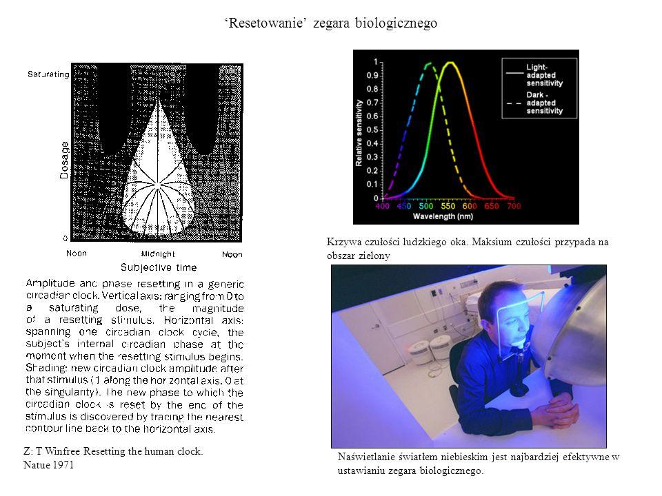 Resetowanie zegara biologicznego Naświetlanie światłem niebieskim jest najbardziej efektywne w ustawianiu zegara biologicznego. Krzywa czułości ludzki