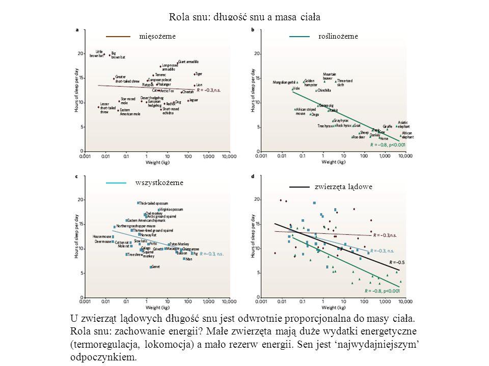 Rola snu: długość snu a masa ciała mięsożerneroślinożerne wszystkożerne zwierzęta lądowe U zwierząt lądowych długość snu jest odwrotnie proporcjonalna