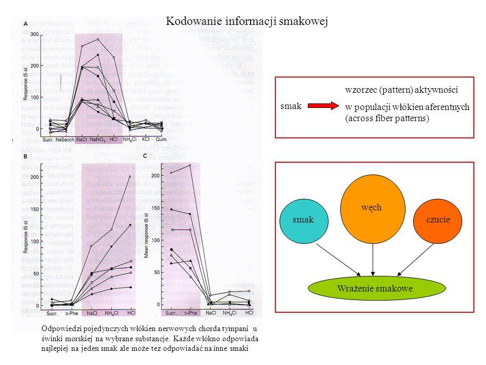 Kodowanie informacji smakowej smak węch czucie Wrażenie smakowe smak wzorzec (pattern) aktywności w populacji włókien aferentnych (across fiber patter