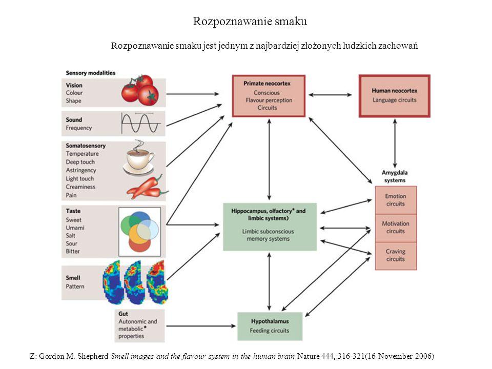 Rozpoznawanie smaku Z: Gordon M. Shepherd Smell images and the flavour system in the human brain Nature 444, 316-321(16 November 2006) Rozpoznawanie s
