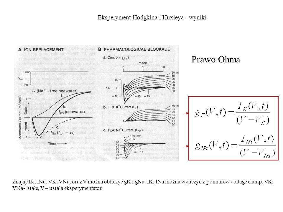 Eksperyment Hodgkina i Huxleya - wyniki Prawo Ohma Znając IK, INa, VK, VNa, oraz V można obliczyć gK i gNa. IK, INa można wyliczyć z pomiarów voltage