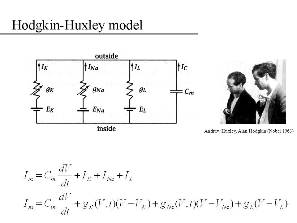 Andrew Huxley, Alan Hodgkin (Nobel 1963)