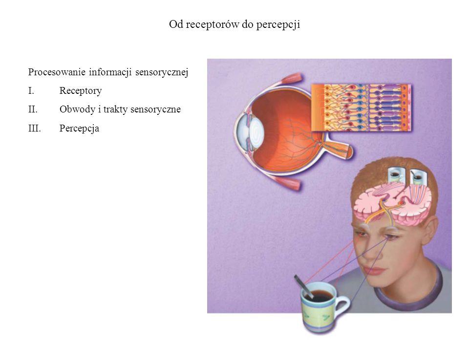 Od receptorów do percepcji Procesowanie informacji sensorycznej I.Receptory II.Obwody i trakty sensoryczne III.Percepcja