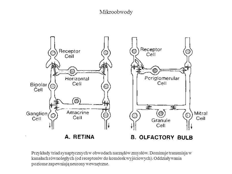 Mikroobwody Przykłady triad synaptycznych w obwodach narządów zmysłów. Dominuje transmisja w kanałach równoległych (od receptorów do komórek wyjściowy