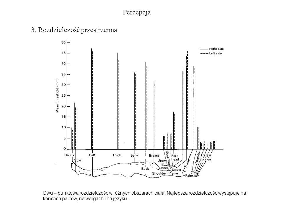 Percepcja 3. Rozdzielczość przestrzenna Dwu – punktowa rozdzielczość w różnych obszarach ciała. Najlepsza rozdzielczość występuje na końcach palców, n