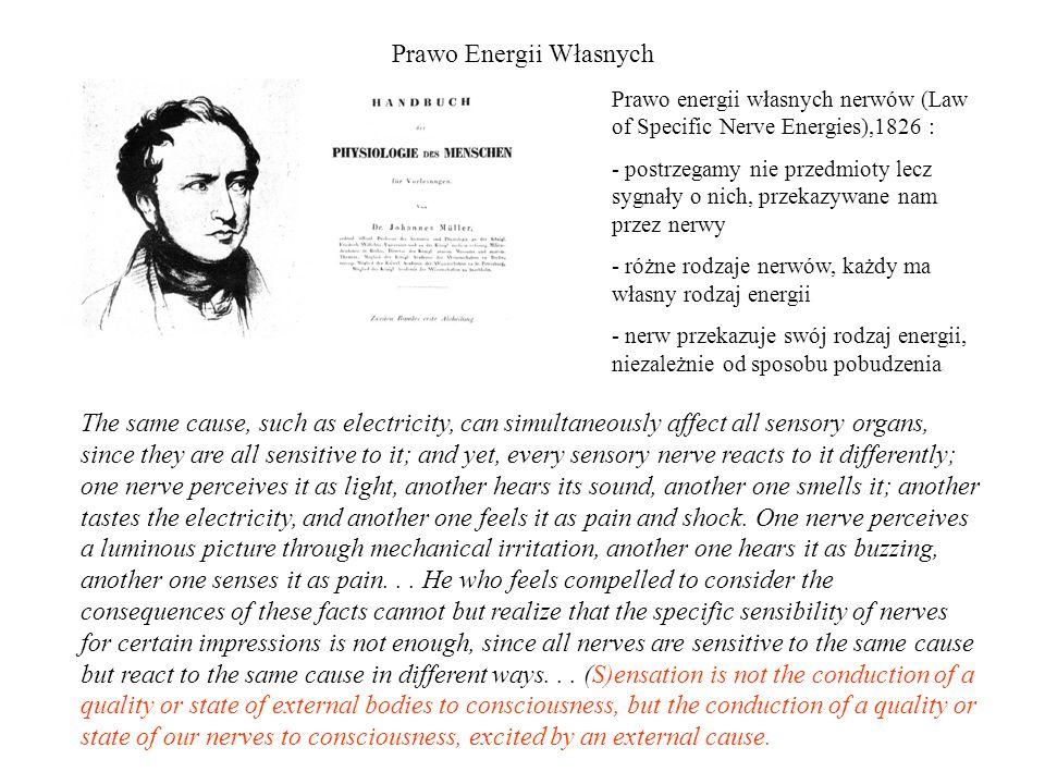 Prawo Energii Własnych Prawo energii własnych nerwów (Law of Specific Nerve Energies),1826 : - postrzegamy nie przedmioty lecz sygnały o nich, przekaz