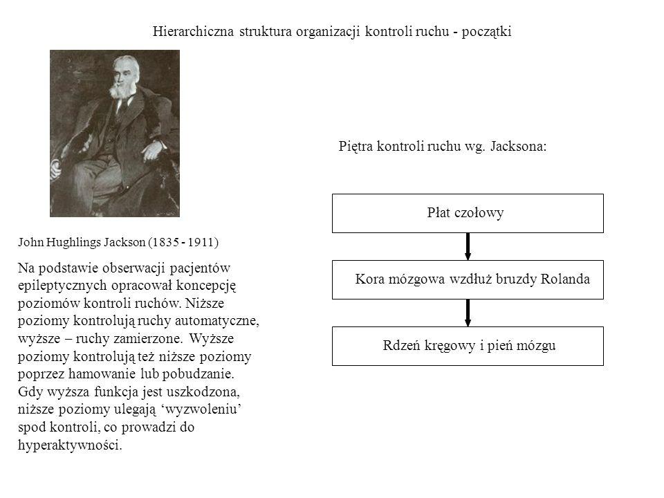 Hierarchiczna struktura organizacji kontroli ruchu - początki Rdzeń kręgowy i pień mózgu Kora mózgowa wzdłuż bruzdy Rolanda Płat czołowy John Hughling