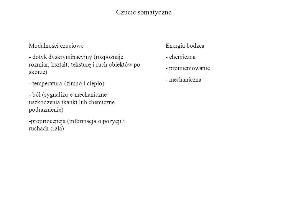 Czucie somatyczne Modalności czuciowe - dotyk dyskryminacyjny (rozpoznaje rozmiar, kształt, teksturę i ruch obiektów po skórze) - temperatura (zimno i