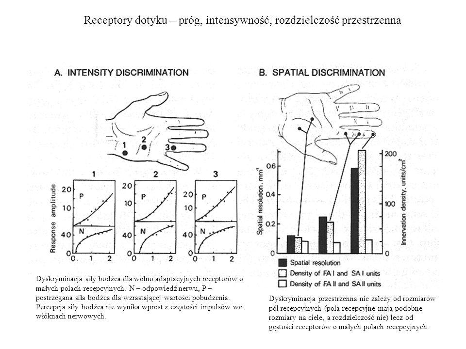 Receptory dotyku – próg, intensywność, rozdzielczość przestrzenna Dyskryminacja siły bodźca dla wolno adaptacyjnych receptorów o małych polach recepcy