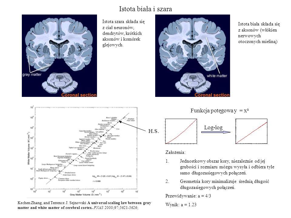 Dendryty - terminologia Neurony posiadają zazwyczaj jeden akson oraz wiele dendrytów.