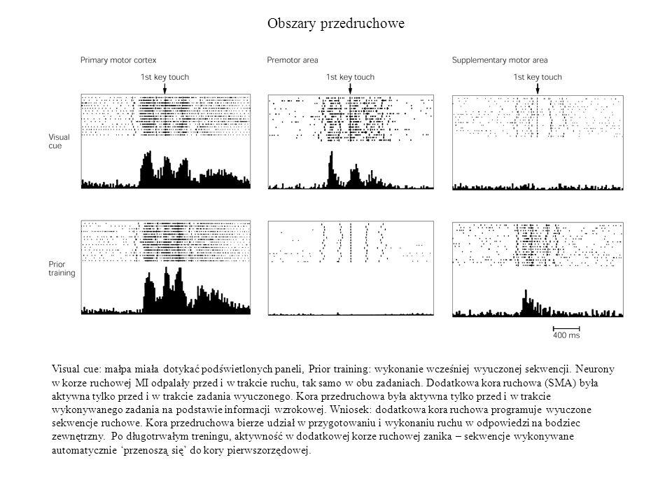Obszary przedruchowe Visual cue: małpa miała dotykać podświetlonych paneli, Prior training: wykonanie wcześniej wyuczonej sekwencji. Neurony w korze r