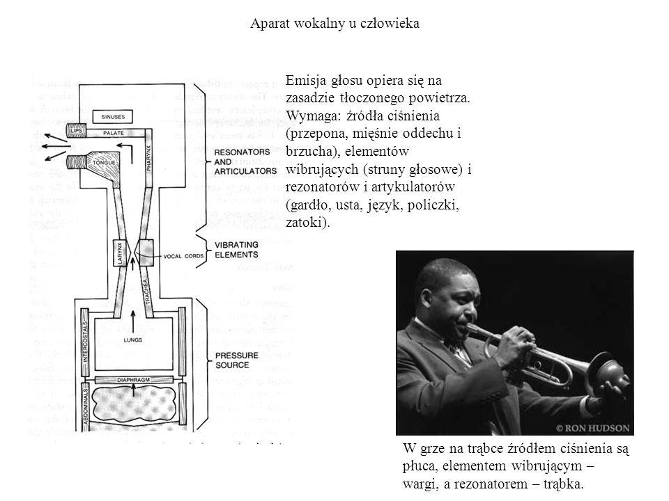 Aparat wokalny u człowieka Emisja głosu opiera się na zasadzie tłoczonego powietrza. Wymaga: źródła ciśnienia (przepona, mięśnie oddechu i brzucha), e