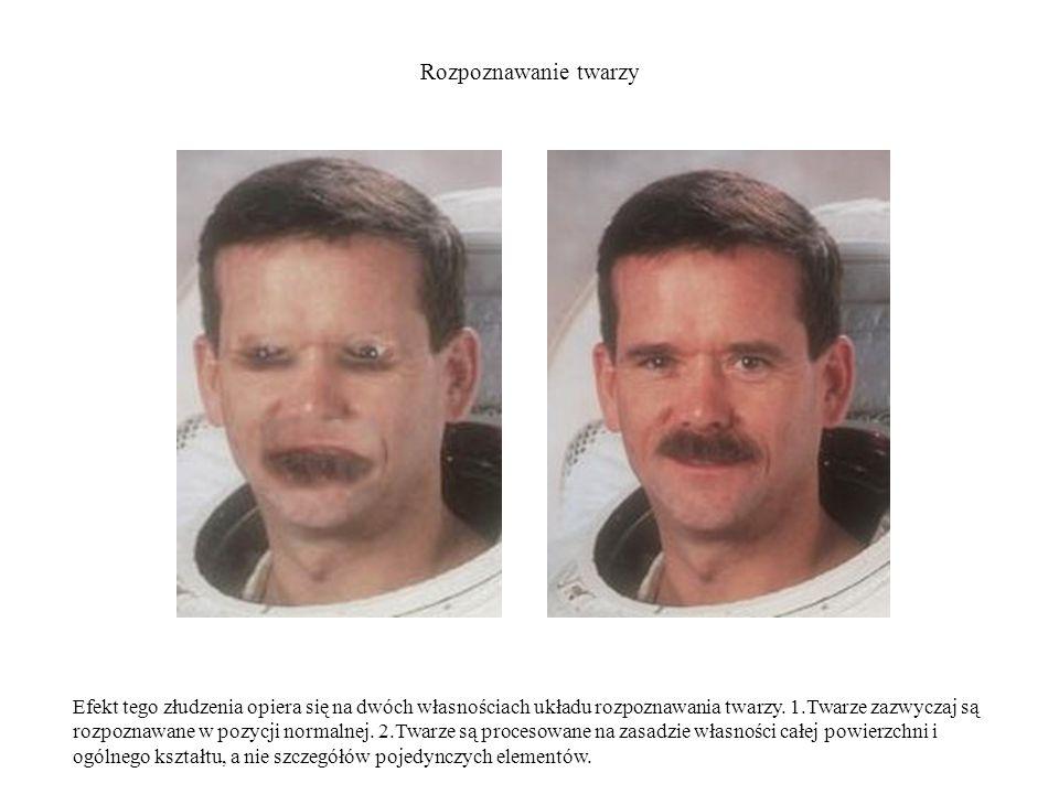 Rozpoznawanie twarzy Efekt tego złudzenia opiera się na dwóch własnościach układu rozpoznawania twarzy. 1.Twarze zazwyczaj są rozpoznawane w pozycji n