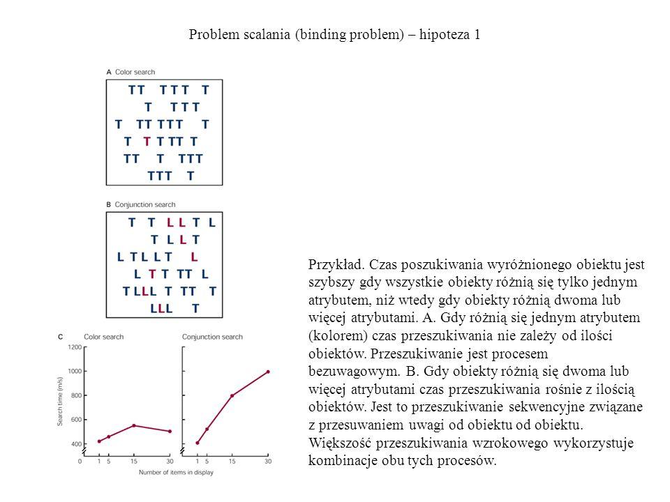Problem scalania (binding problem) – hipoteza 2 Uwaga zwęża pole recepcyjne do jednego przedmiotu – Reynolds i Desimone, 1999 Obserwacje: - rozmiary pól recepcyjnych neuronów rosną wraz z poziomem w hierarchii drogi wzrokowej (np.