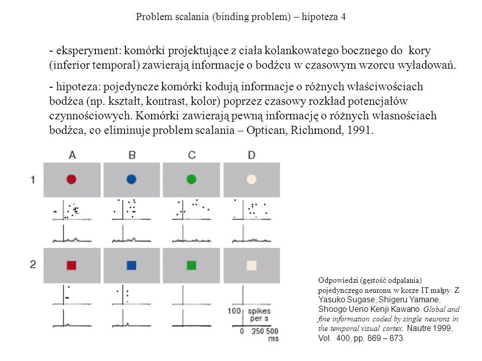 Problem scalania (binding problem) – hipoteza 4 - eksperyment: komórki projektujące z ciała kolankowatego bocznego do kory (inferior temporal) zawierają informacje o bodźcu w czasowym wzorcu wyładowań.