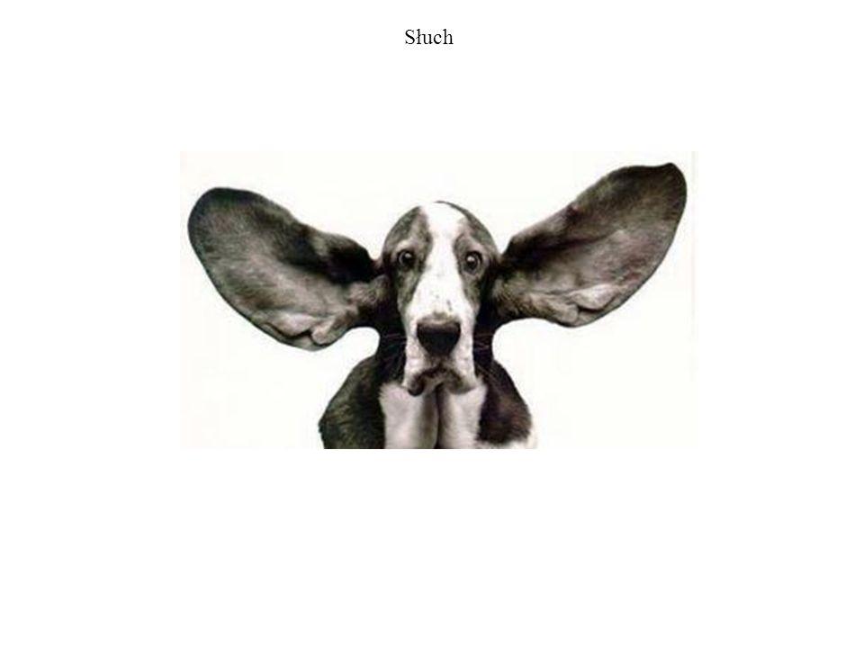 Dźwięki Zakres słyszalnych dźwięków u wybranych zwierząt.