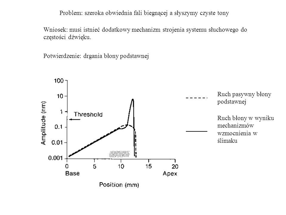 Problem: szeroka obwiednia fali biegnącej a słyszymy czyste tony Wniosek: musi istnieć dodatkowy mechanizm strojenia systemu słuchowego do częstości d