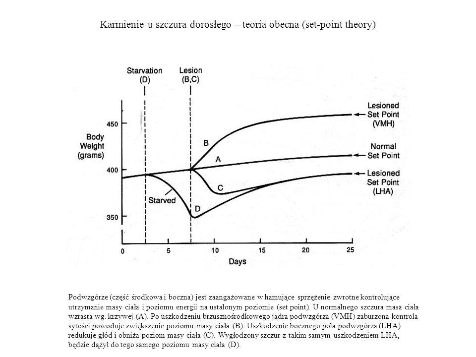 Karmienie u szczura dorosłego – teoria obecna (set-point theory) Podwzgórze (część środkowa i boczna) jest zaangażowane w hamujące sprzężenie zwrotne