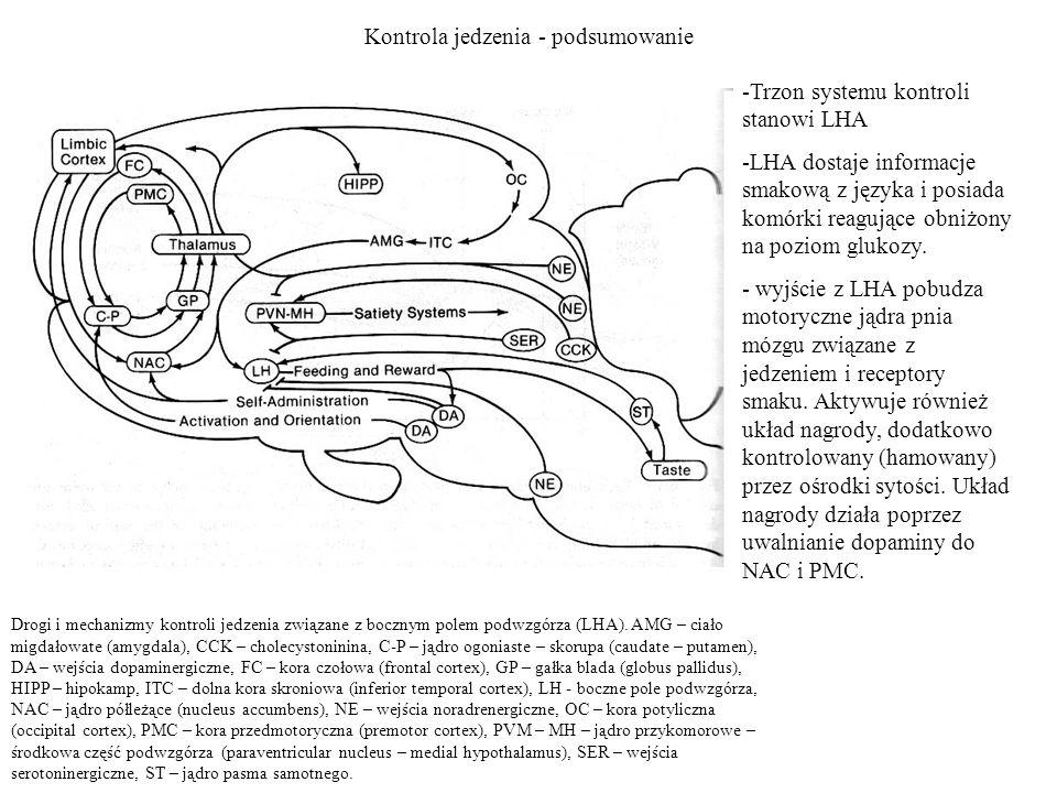 Kontrola jedzenia - podsumowanie Drogi i mechanizmy kontroli jedzenia związane z bocznym polem podwzgórza (LHA). AMG – ciało migdałowate (amygdala), C