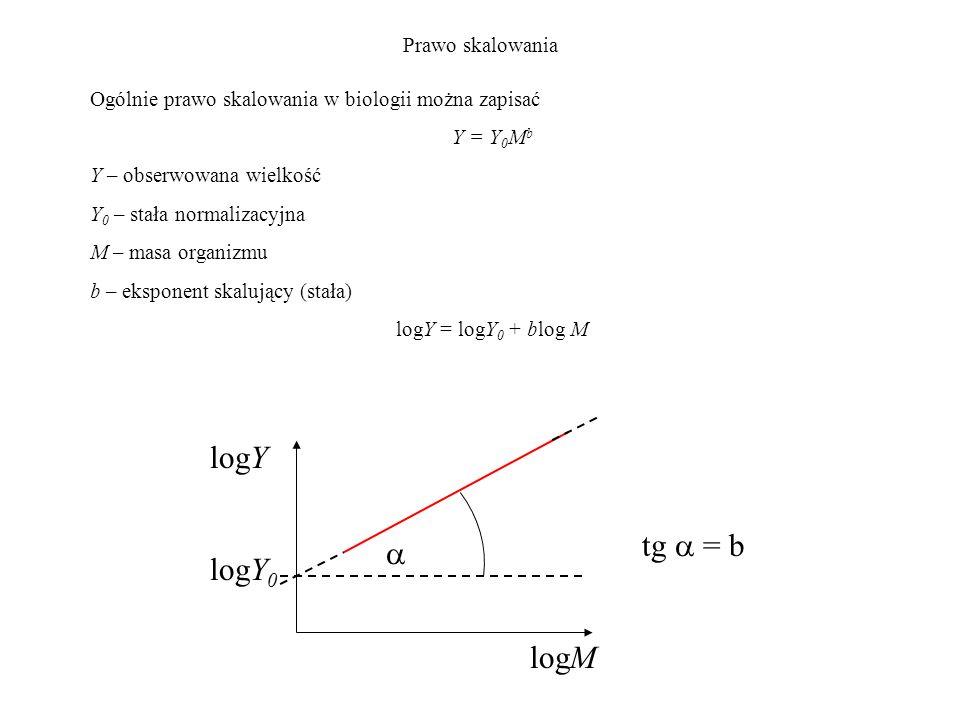 Prawo skalowania Ogólnie prawo skalowania w biologii można zapisać Y = Y 0 M b Y – obserwowana wielkość Y 0 – stała normalizacyjna M – masa organizmu