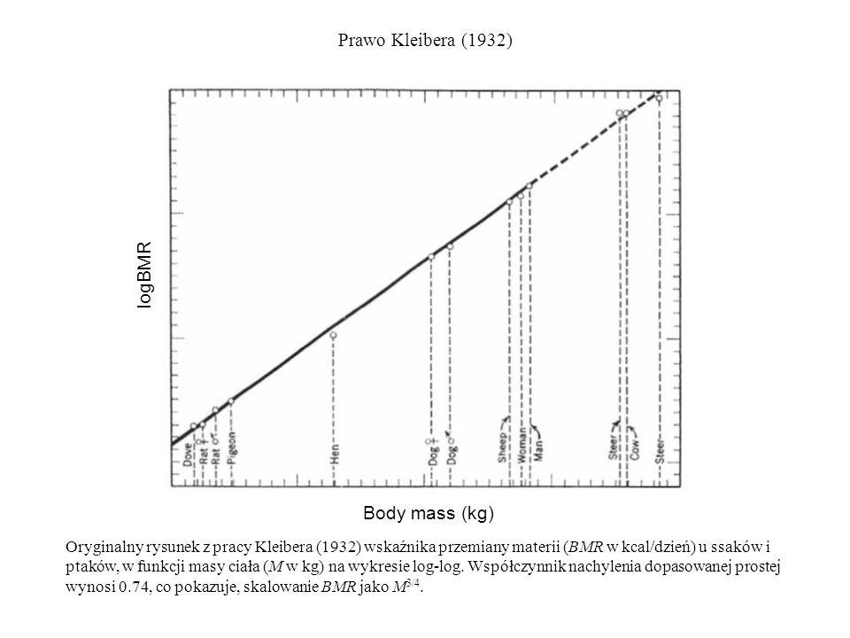 Prawo Kleibera (1932) Body mass (kg) logBMR Oryginalny rysunek z pracy Kleibera (1932) wskaźnika przemiany materii (BMR w kcal/dzień) u ssaków i ptakó