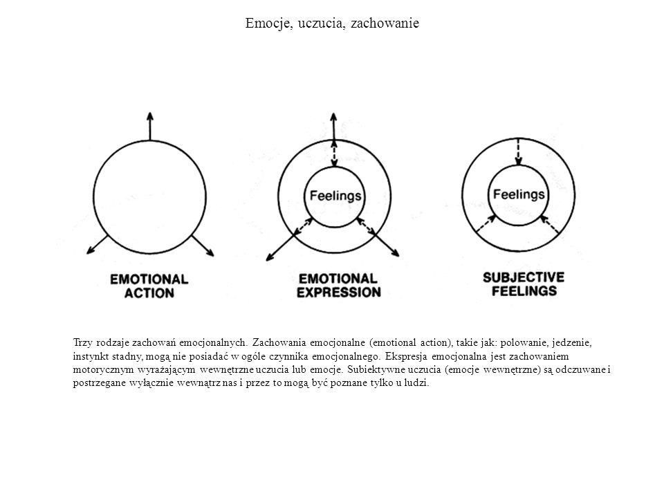 Emocje, uczucia, zachowanie Trzy rodzaje zachowań emocjonalnych. Zachowania emocjonalne (emotional action), takie jak: polowanie, jedzenie, instynkt s