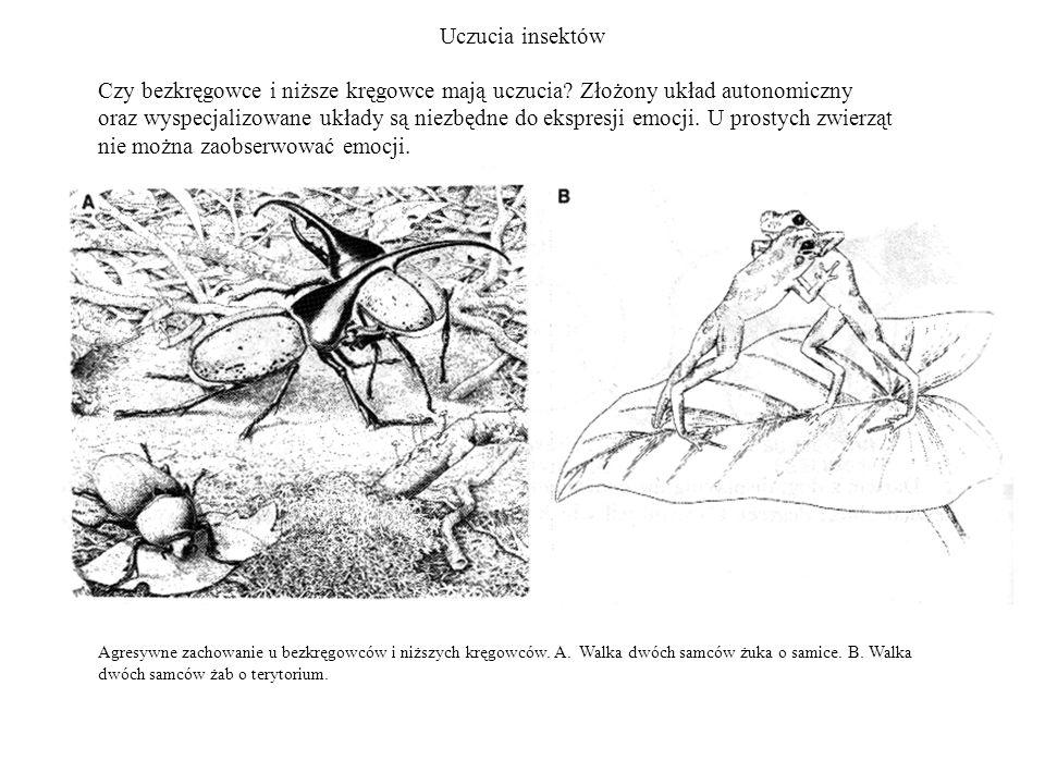 Uczucia insektów Agresywne zachowanie u bezkręgowców i niższych kręgowców. A. Walka dwóch samców żuka o samice. B. Walka dwóch samców żab o terytorium