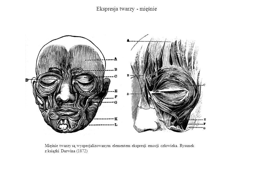 Ekspresja twarzy - mięśnie Mięśnie twarzy są wyspecjalizowanym elementem ekspresji emocji człowieka. Rysunek z książki Darwina (1872)
