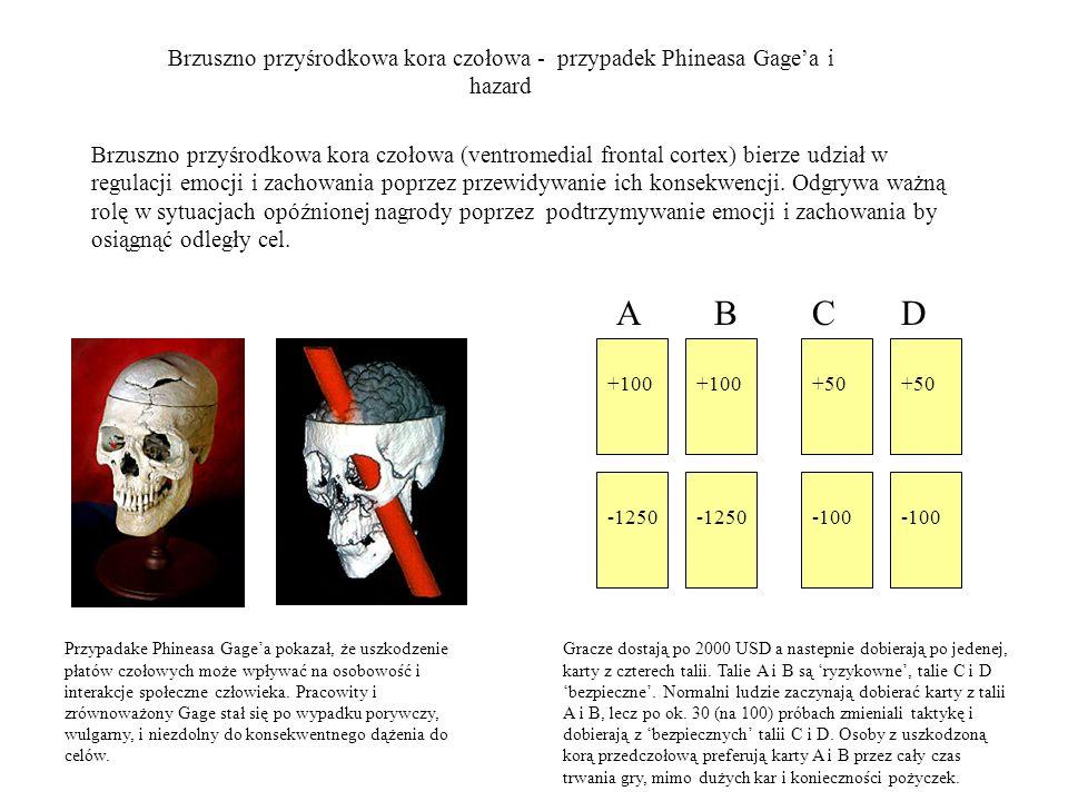 Brzuszno przyśrodkowa kora czołowa - przypadek Phineasa Gagea i hazard Przypadake Phineasa Gagea pokazał, że uszkodzenie płatów czołowych może wpływać