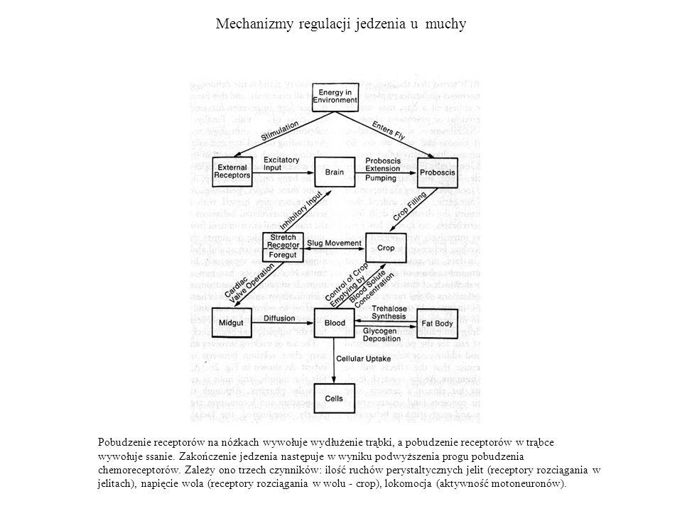 Ciało migdałowate - połączenia Części mózgu tworzące połączenia z ciałem migdałowatym.