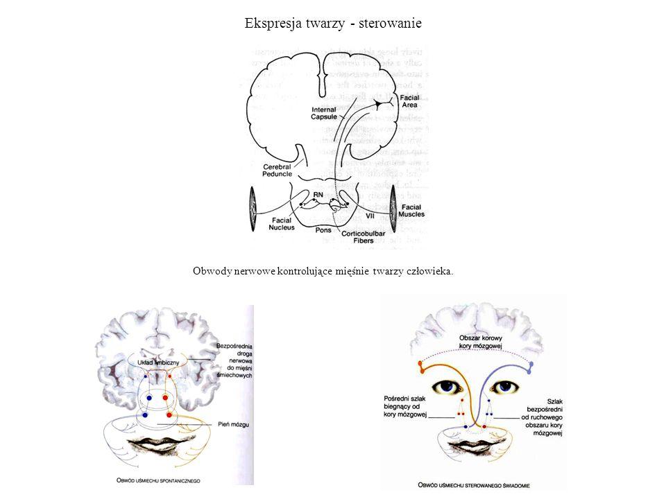 Ekspresja twarzy - sterowanie Obwody nerwowe kontrolujące mięśnie twarzy człowieka.