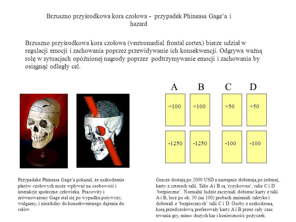 Brzuszno przyśrodkowa kora czołowa - przypadek Phineasa Gagea i hazard Przypadake Phineasa Gagea pokazał, że uszkodzenie płatów czołowych może wpływać na osobowość i interakcje społeczne człowieka.