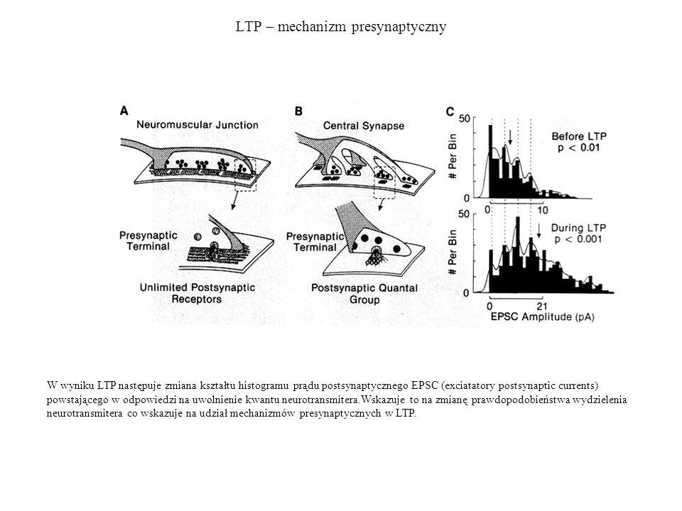 LTP – mechanizm presynaptyczny W wyniku LTP następuje zmiana kształtu histogramu prądu postsynaptycznego EPSC (exciatatory postsynaptic currents) powstającego w odpowiedzi na uwolnienie kwantu neurotransmitera.Wskazuje to na zmianę prawdopodobieństwa wydzielenia neurotransmitera co wskazuje na udział mechanizmów presynaptycznych w LTP.