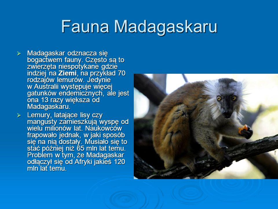 Fauna Madagaskaru Madagaskar odznacza się bogactwem fauny. Często są to zwierzęta niespotykane gdzie indziej na Ziemi, na przykład 70 rodzajów lemurów