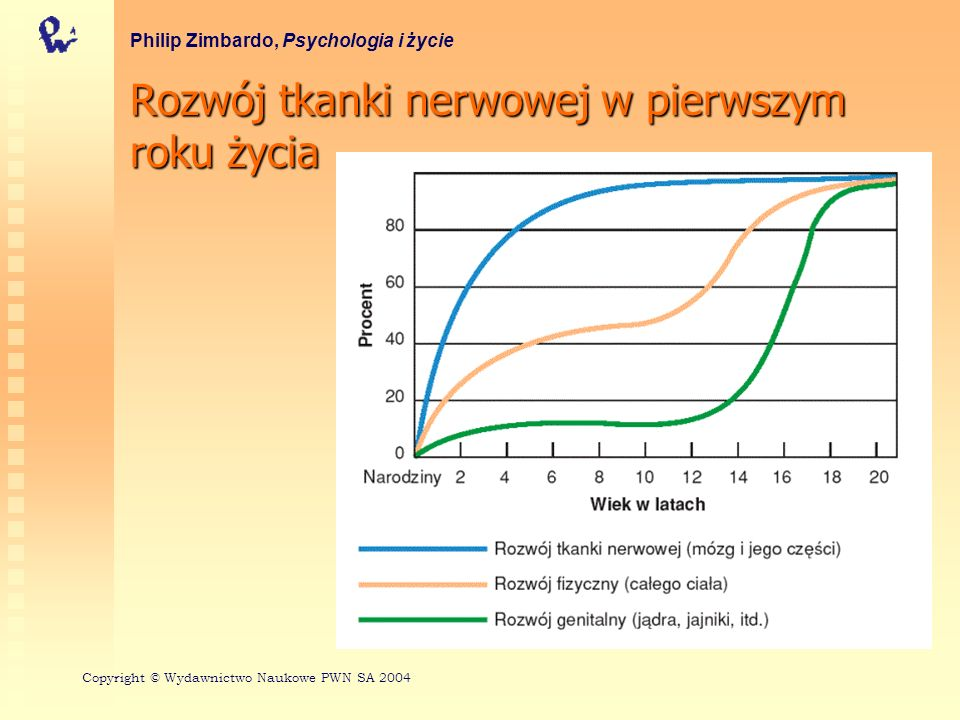 Rozwój tkanki nerwowej w pierwszym roku życia Philip Zimbardo, Psychologia i życie Copyright © Wydawnictwo Naukowe PWN SA 2004