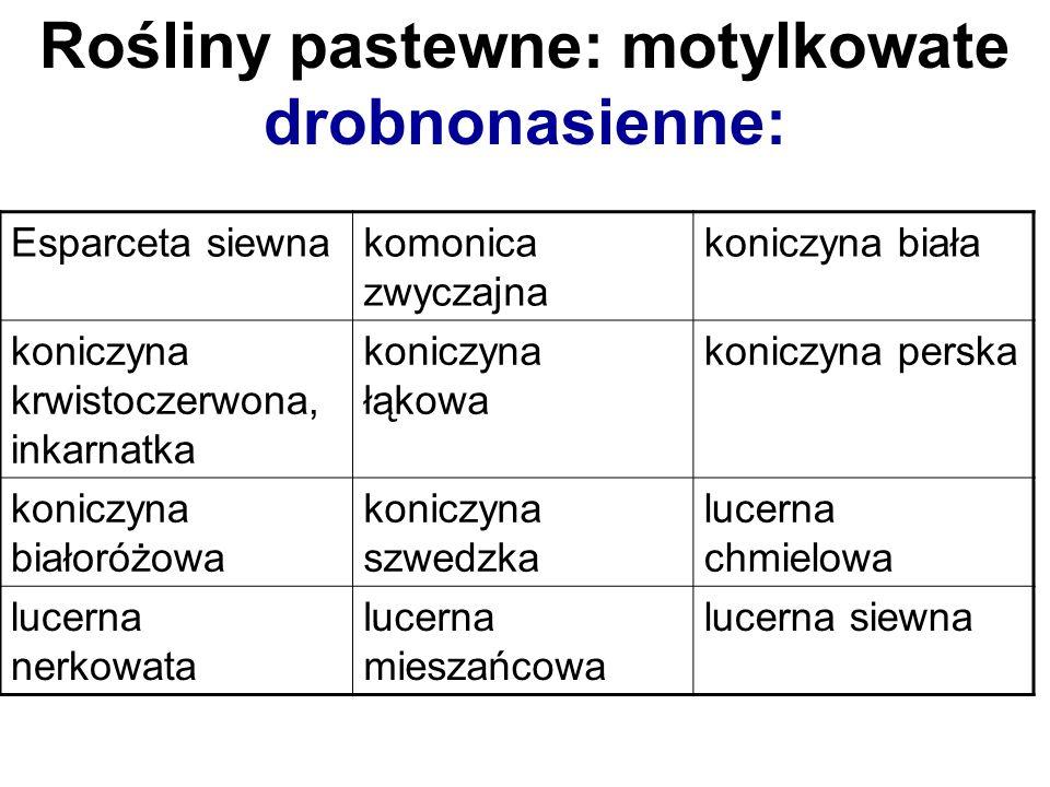 Esparceta siewnakomonica zwyczajna koniczyna biała koniczyna krwistoczerwona, inkarnatka koniczyna łąkowa koniczyna perska koniczyna białoróżowa konic