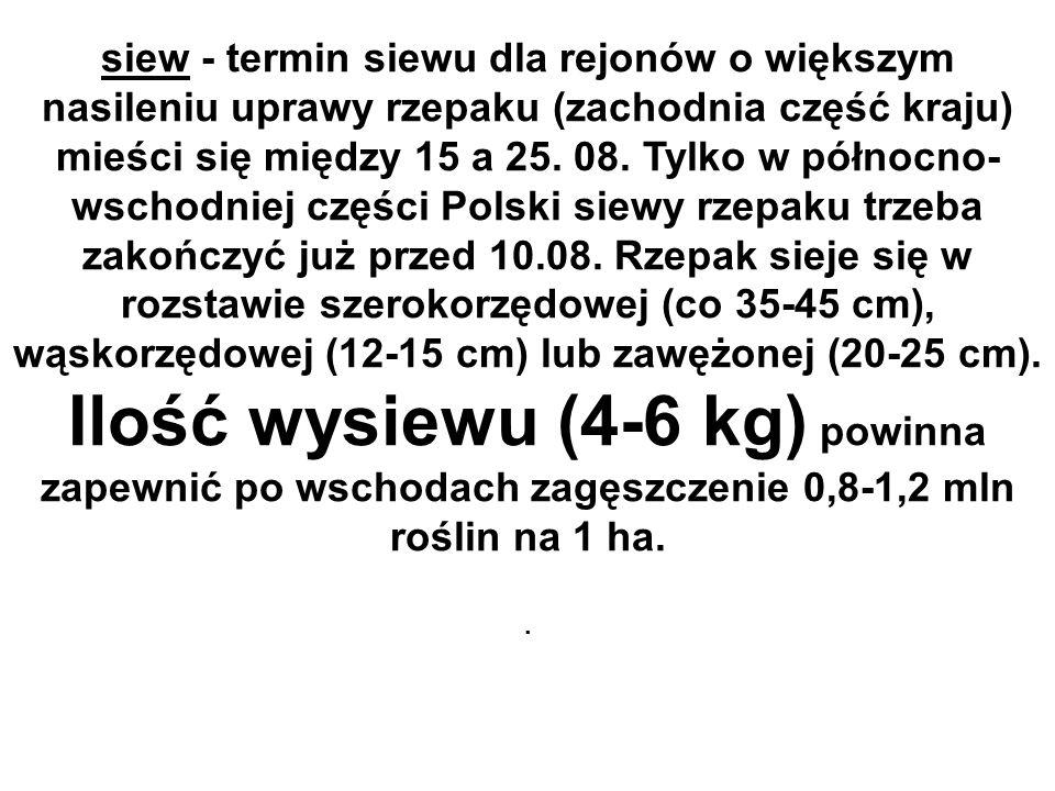 siew - termin siewu dla rejonów o większym nasileniu uprawy rzepaku (zachodnia część kraju) mieści się między 15 a 25. 08. Tylko w północno- wschodnie