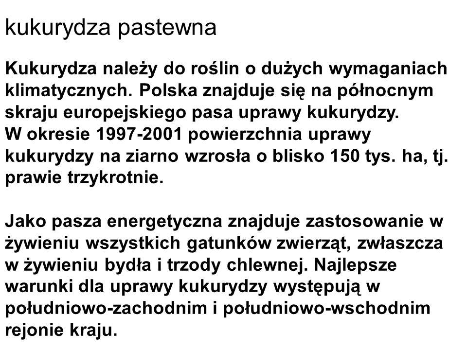 Kukurydza należy do roślin o dużych wymaganiach klimatycznych. Polska znajduje się na północnym skraju europejskiego pasa uprawy kukurydzy. W okresie