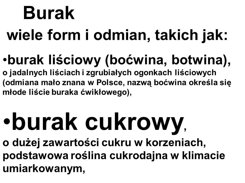 burak liściowy (boćwina, botwina), o jadalnych liściach i zgrubiałych ogonkach liściowych (odmiana mało znana w Polsce, nazwą boćwina określa się młod