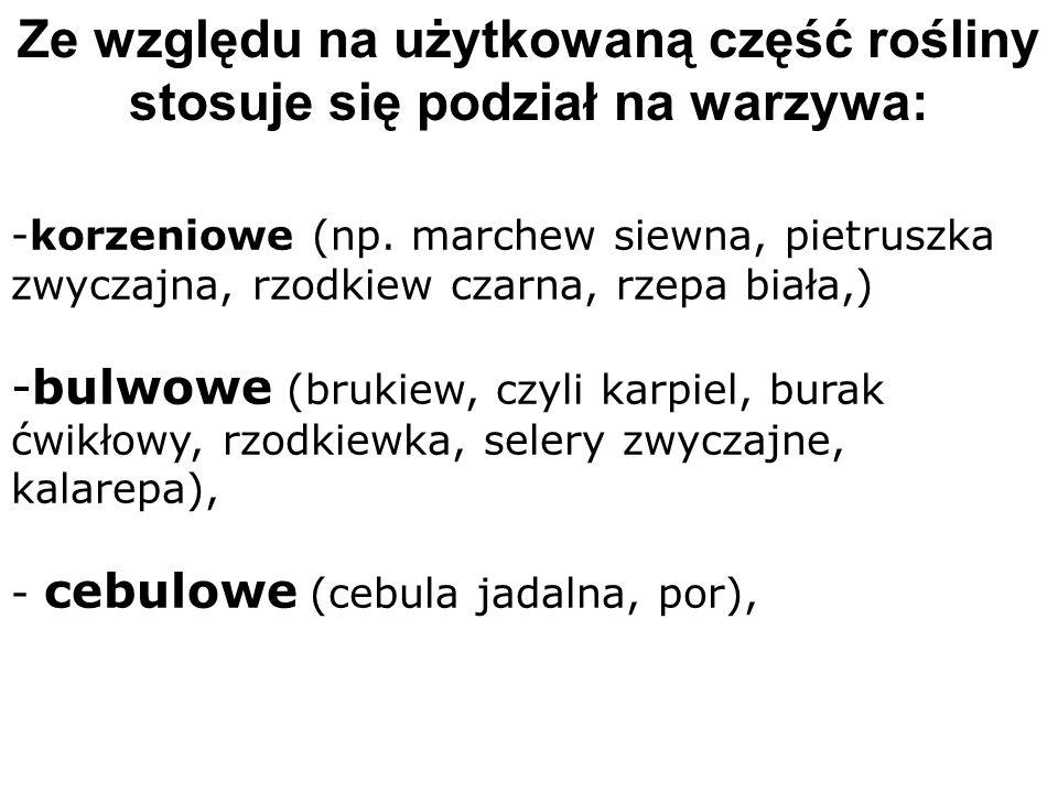 -korzeniowe (np. marchew siewna, pietruszka zwyczajna, rzodkiew czarna, rzepa biała,) -bulwowe (brukiew, czyli karpiel, burak ćwikłowy, rzodkiewka, se